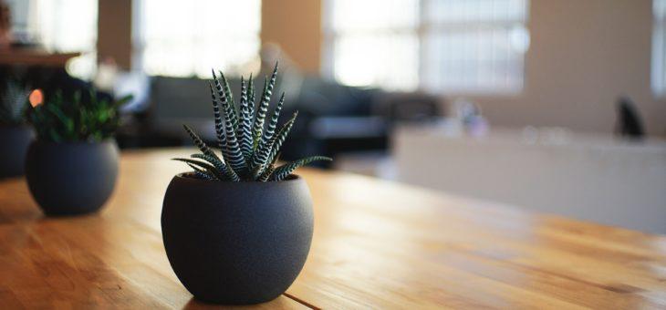 Quali sono le piante da avere in casa?